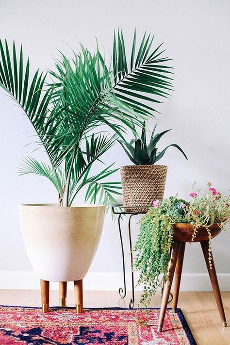 Why indoor plants are good for your health